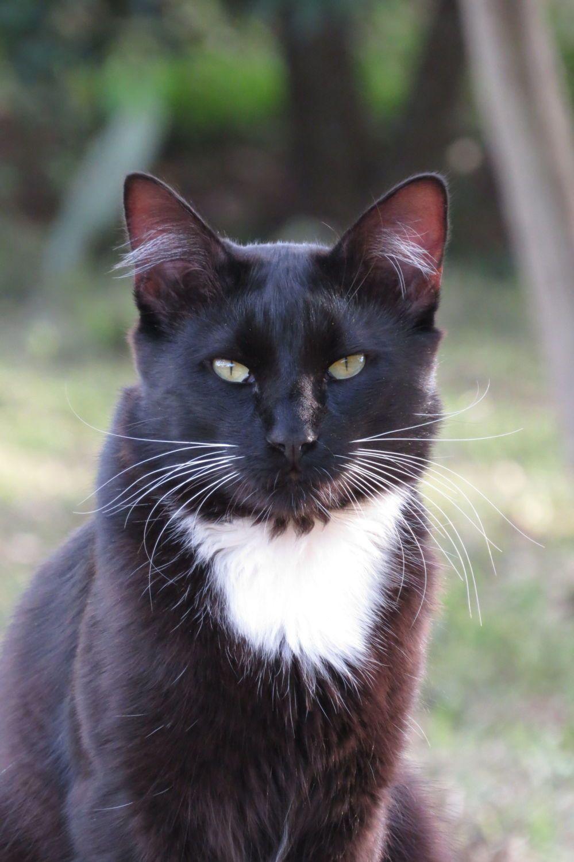 TheKindaFarmGal's photos in Cat Chat!