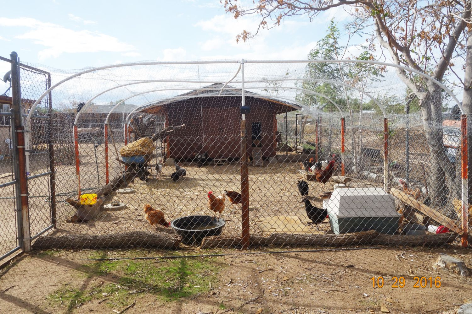 Har and Mau's first chicken coop