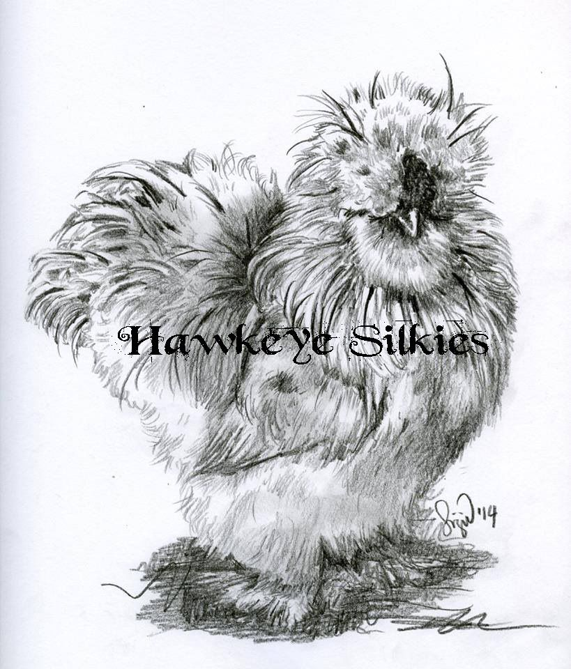 Hawkeye95's photos in Silkie thread!