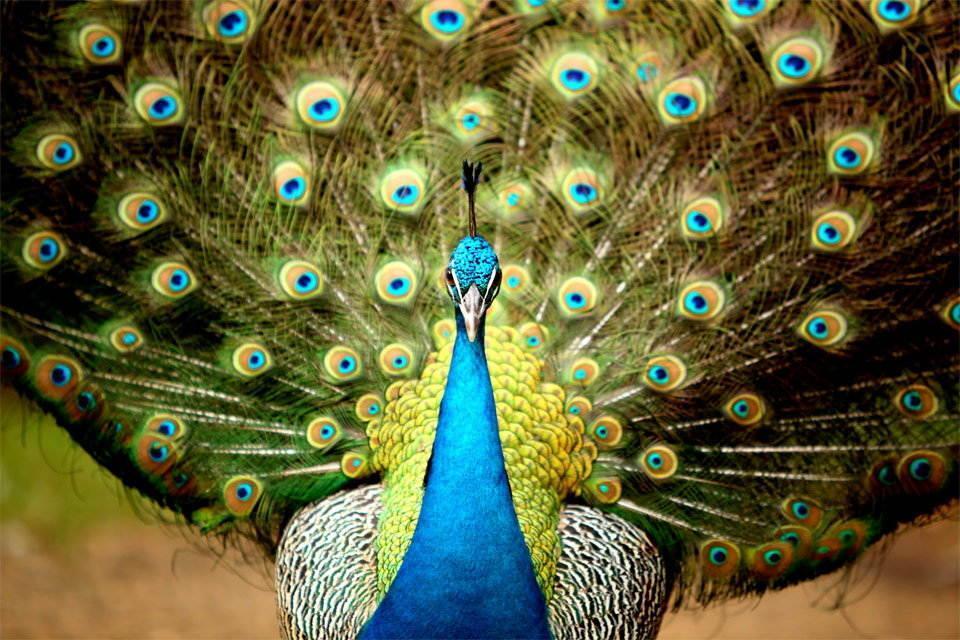 137868_25-most-beautiful-animals-photography-stumbleupon-5.jpg