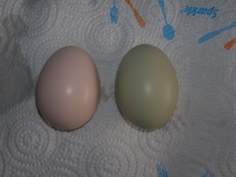 eggs n stuff 076.jpg