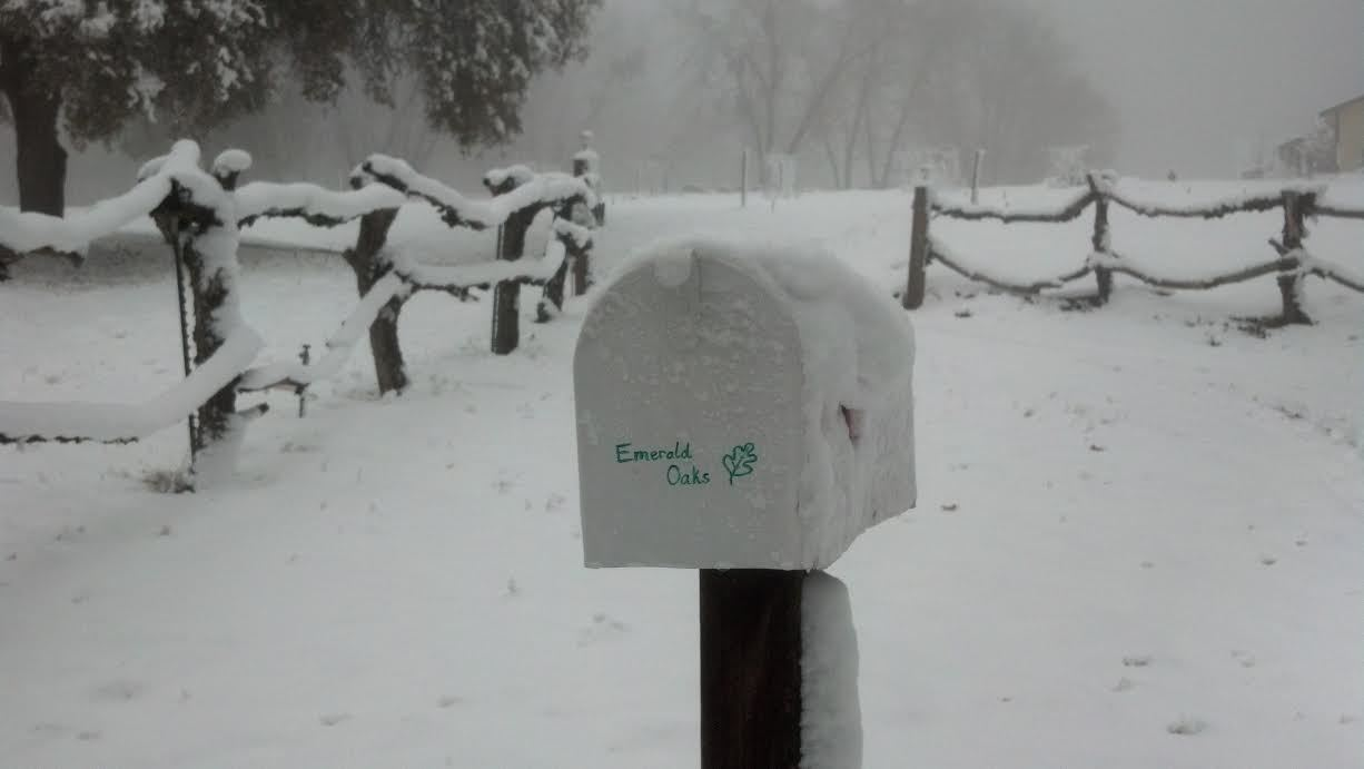 Snow 2013 3.jpg