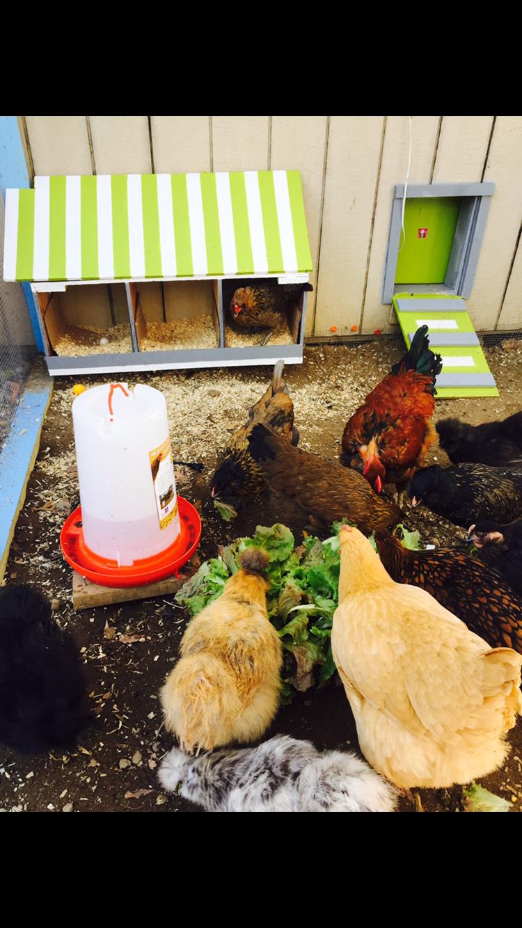 My new chicken run