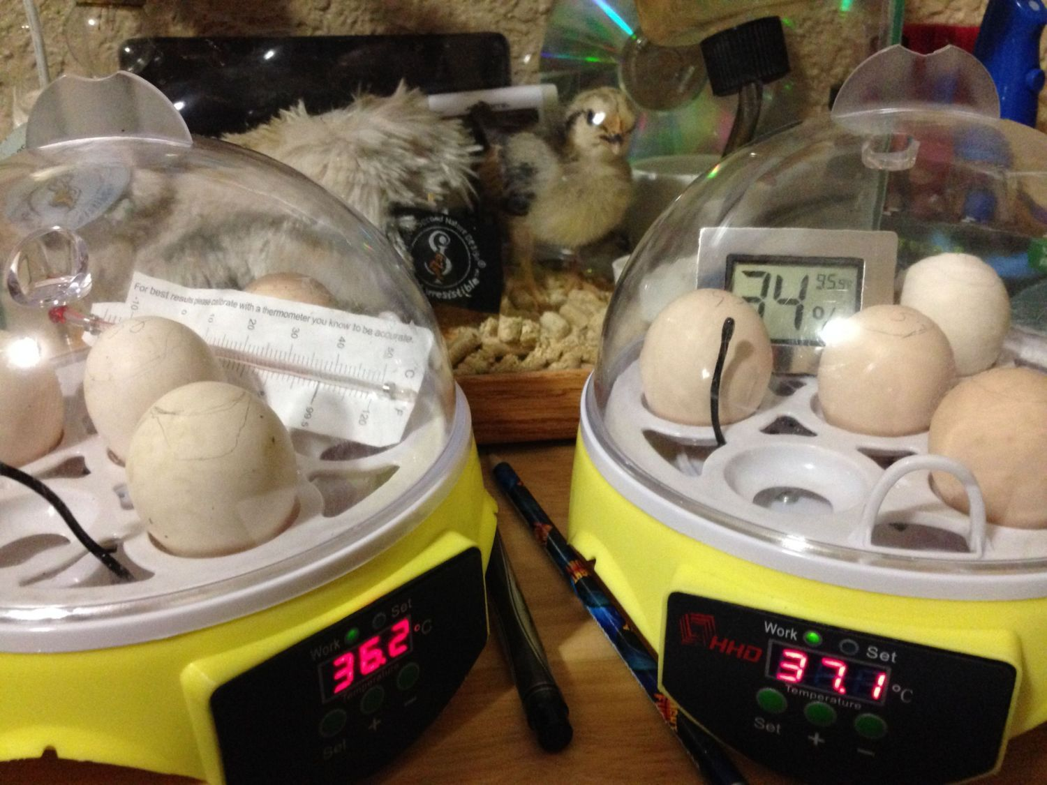 Third attempt with a new incubator.