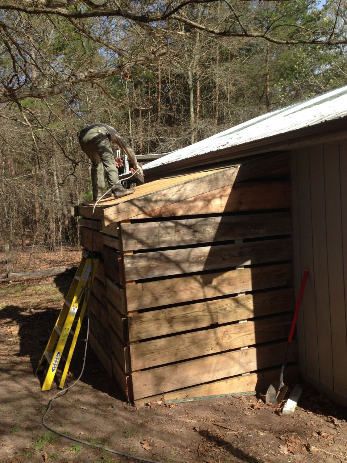 Dan putting the shingles on the new coop!