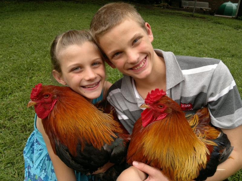 Carin's photos in show off your roosters