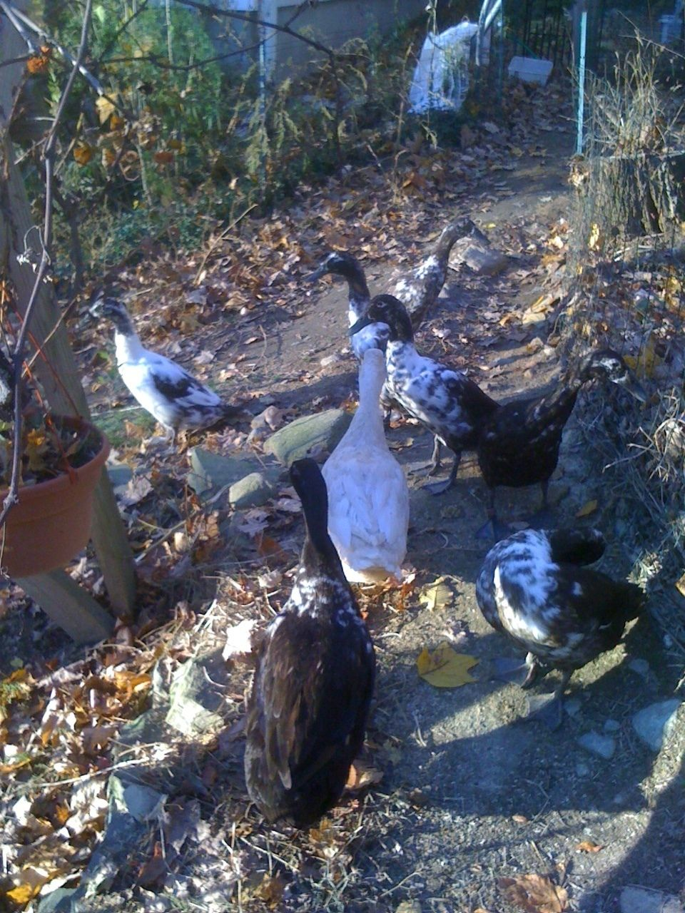 Some of the flock, 10/2012