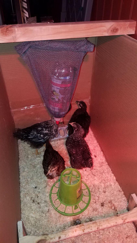 dewtattoo's photos in Chicks kept spilling their water