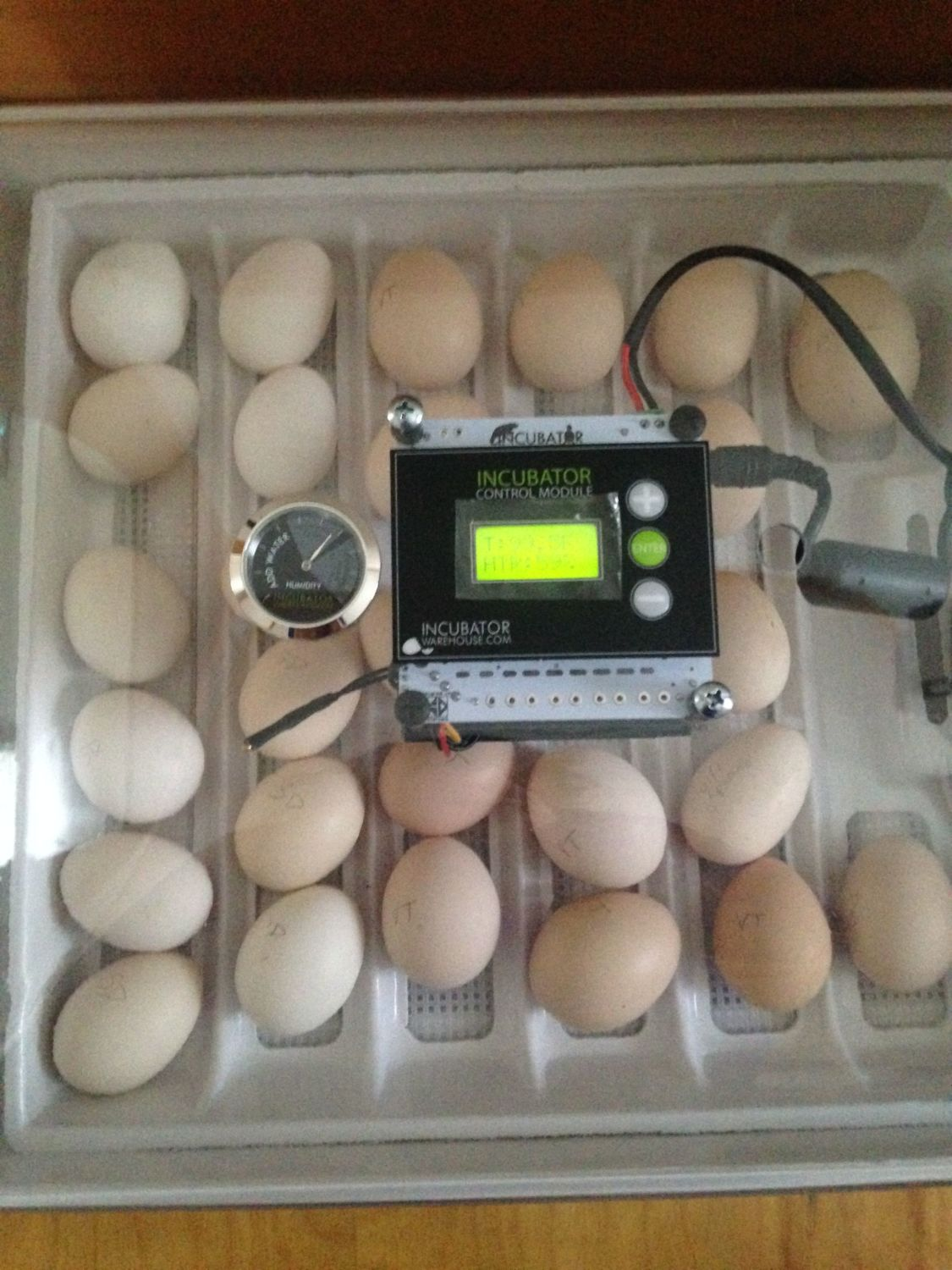 FishMtFarm's photos in Need advice on egg placement in incubator