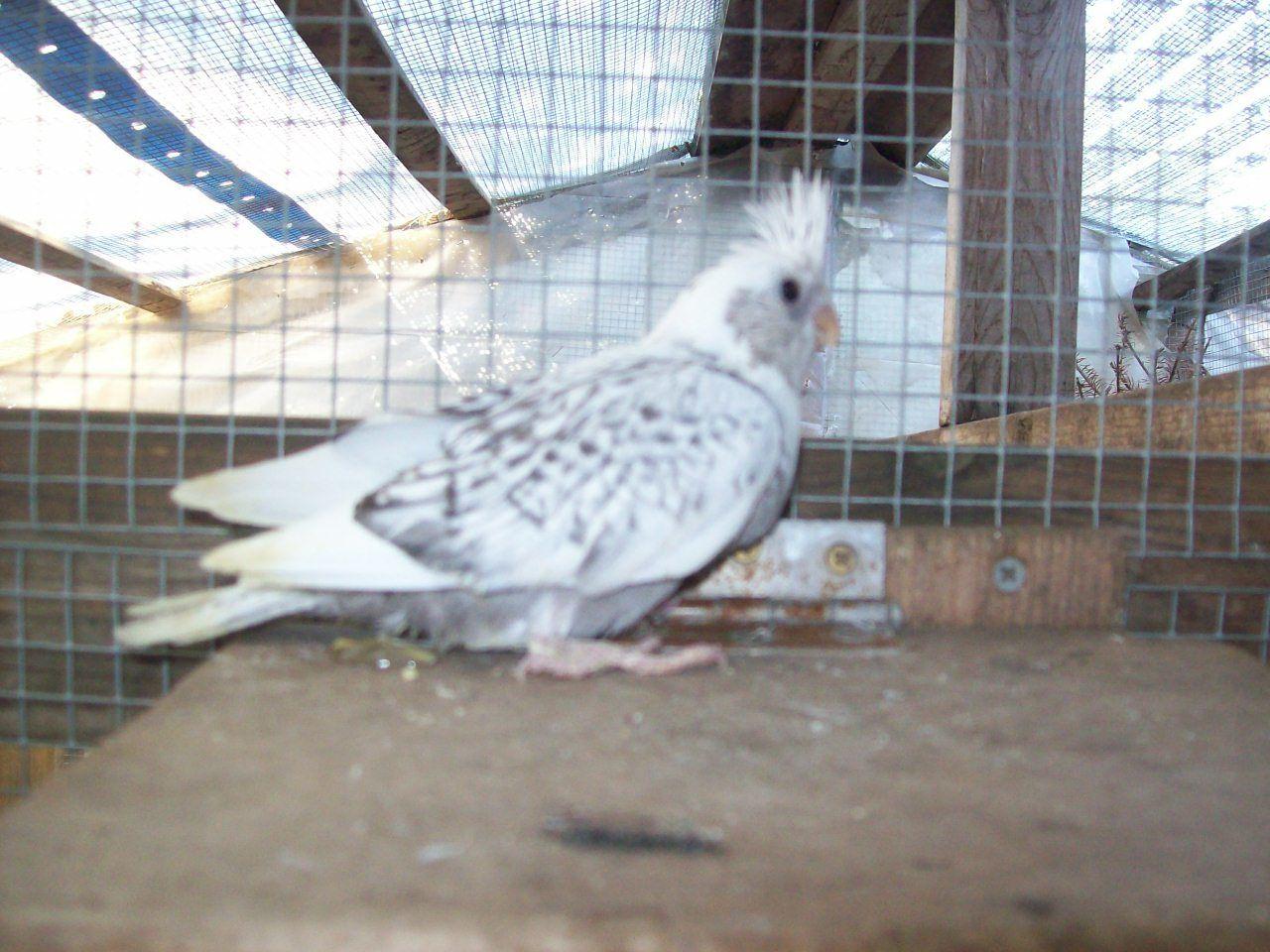 Tonys birds 441.jpg