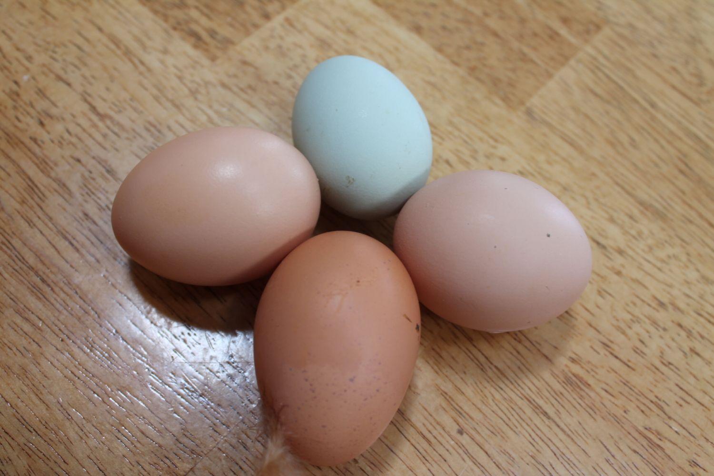 My Egg Pics