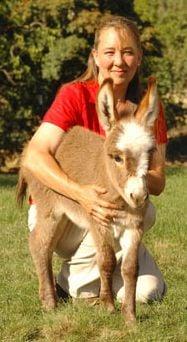 donkeydiva profile picture