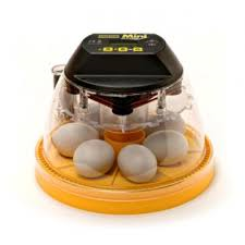 ChickenGrass's photos in How to position eggs with floating air sacs in a Brinsea Mini?