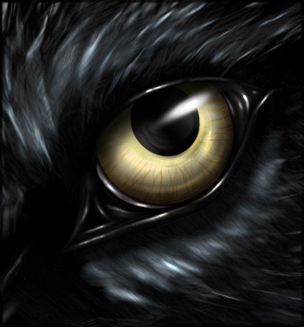 OwlLover profile picture