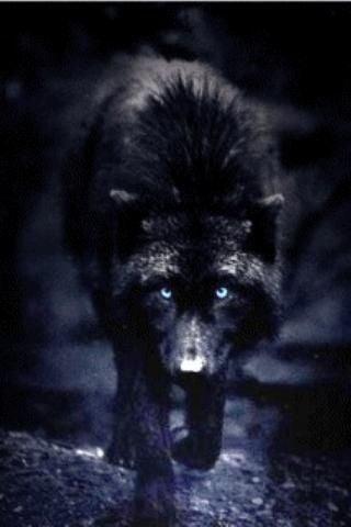 Black Alpha Wolf Wallpaper