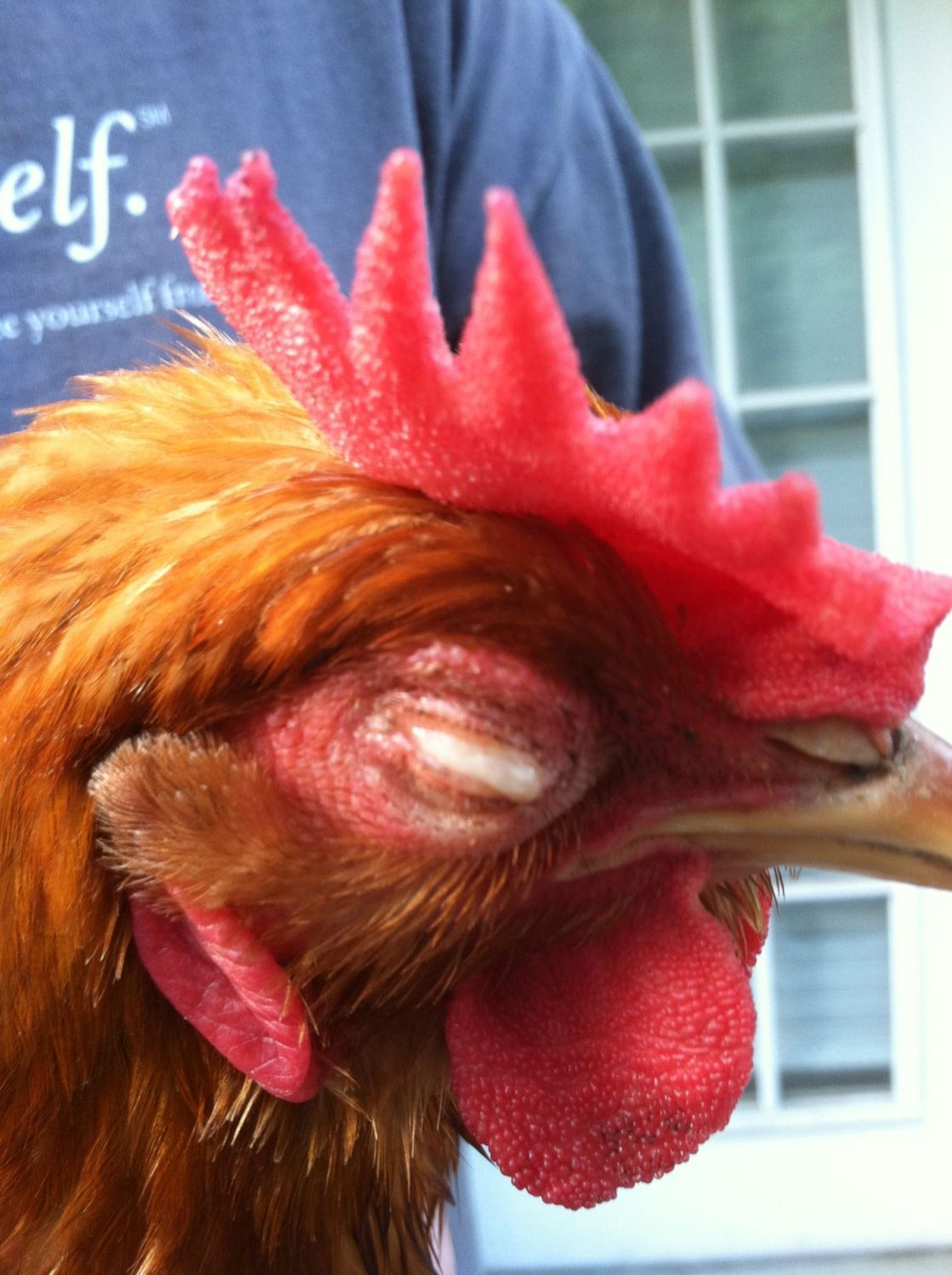 "JBarringerNC's photos in My Hen ""sissy spacek,"" may have lost an eye.. see pic(s)"