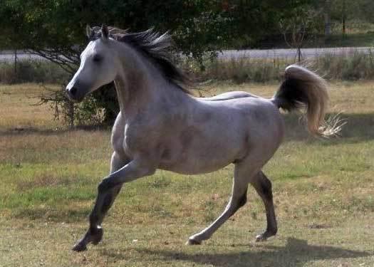 res's photos in Horse Talk