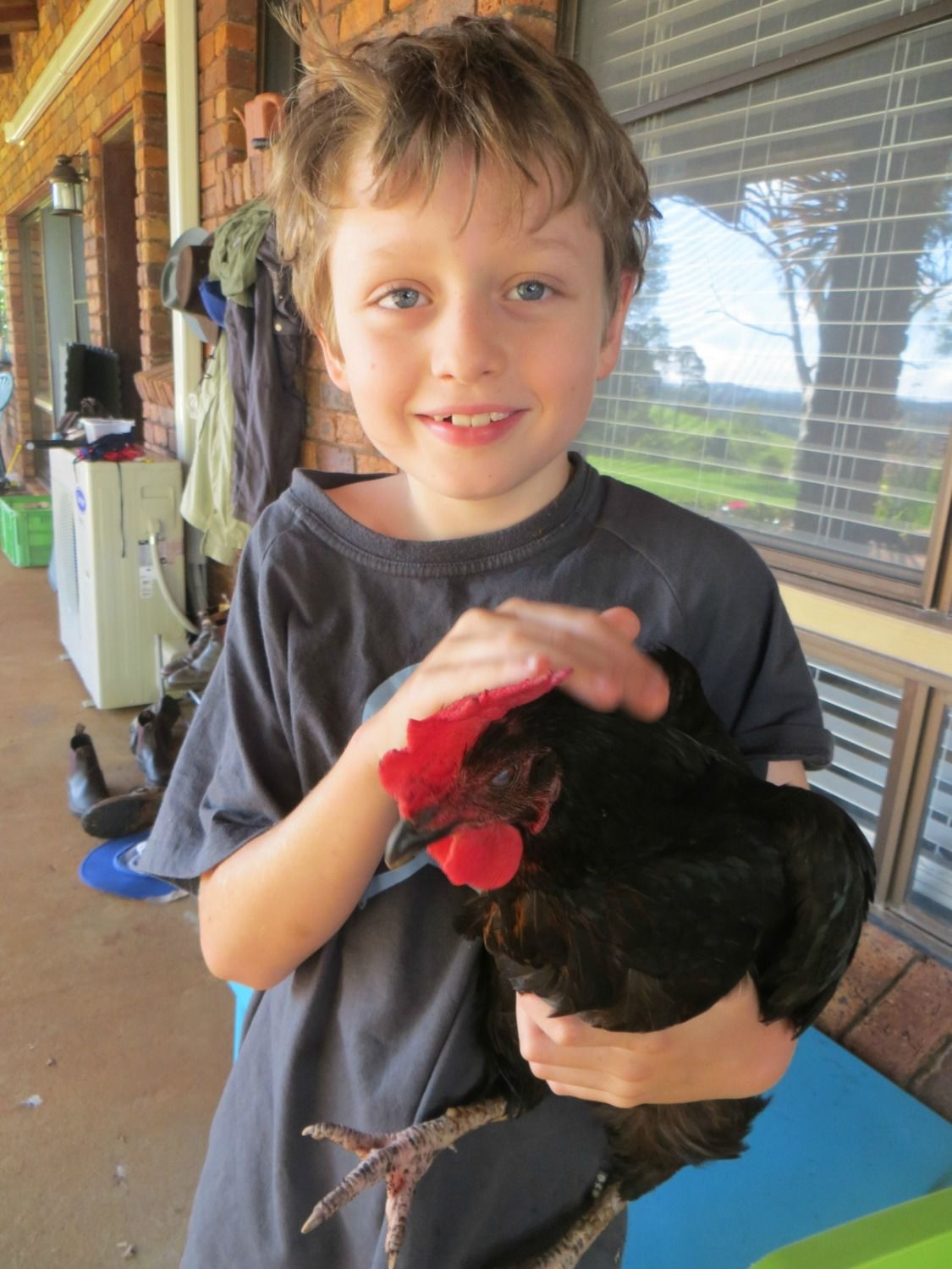 Finding Fifth's photos in Help Me Identify My Chooks Please