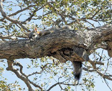sleeping-fox-rgb1.jpg