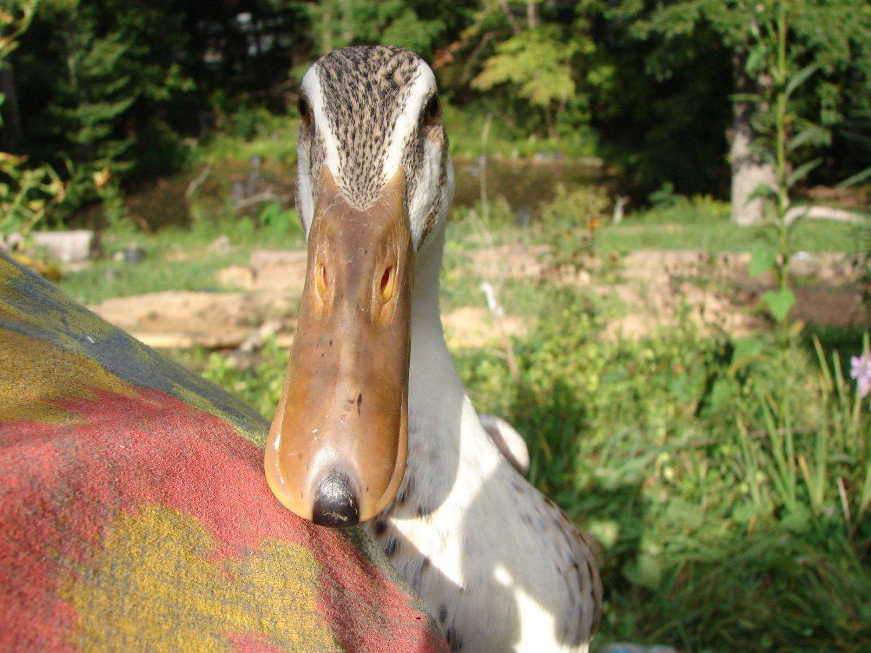 Duck Hill