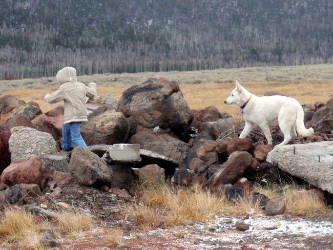 Souperchicken's photos in the +*OFFICIAL*+ German Shepherd thread :D