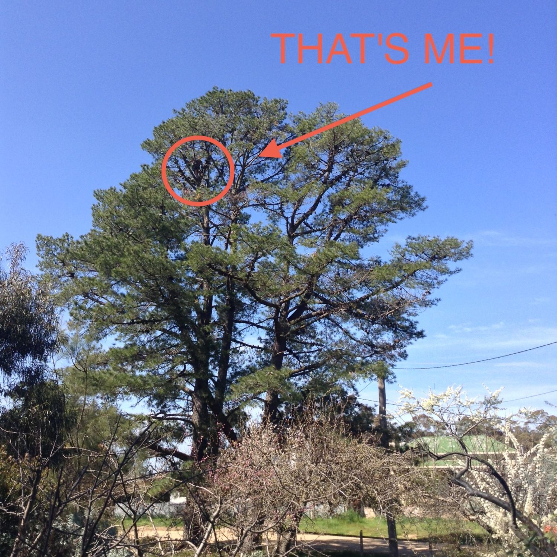 That's me climbing a tree!