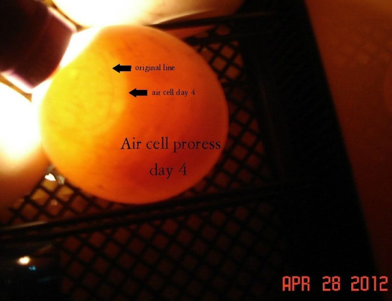 aircellprogressday4.jpg