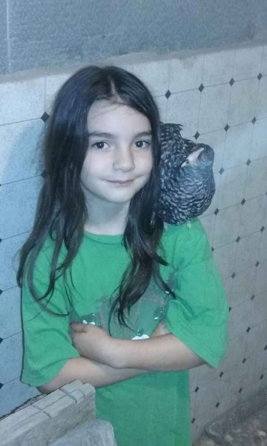 Isabella and a Barred Rock in our coop