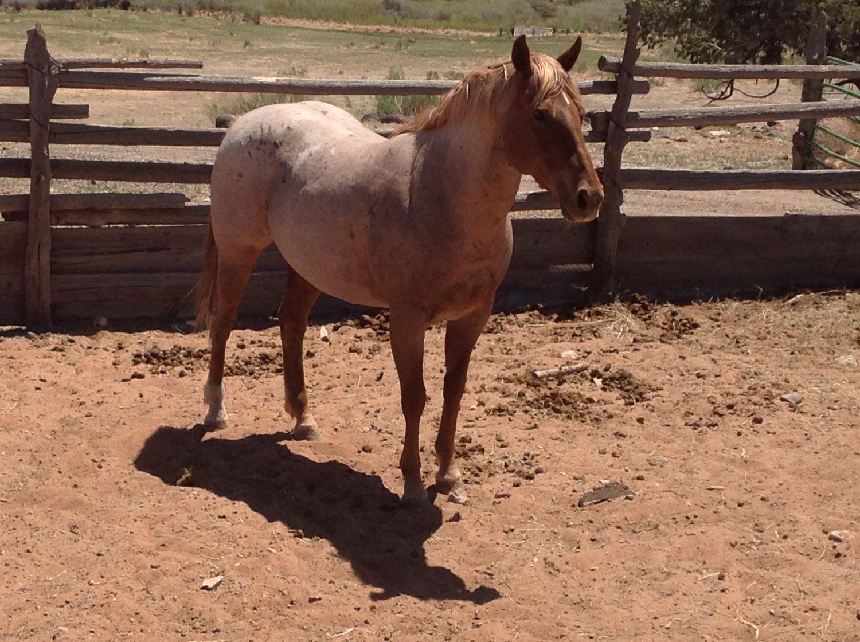 Souperchicken's photos in Horses!!!!!!!!