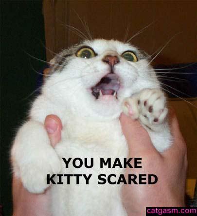 really+funny+cat+pics+5.jpg