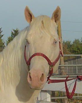 Sueg4332 profile picture