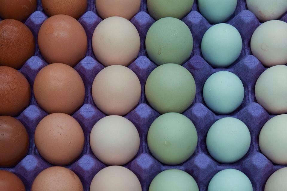 hokankai's photos in Contest #14 Natural Egg Photo Contest  2014 Easter Hatch-a-long!