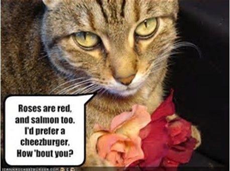 valentine cat.jpg