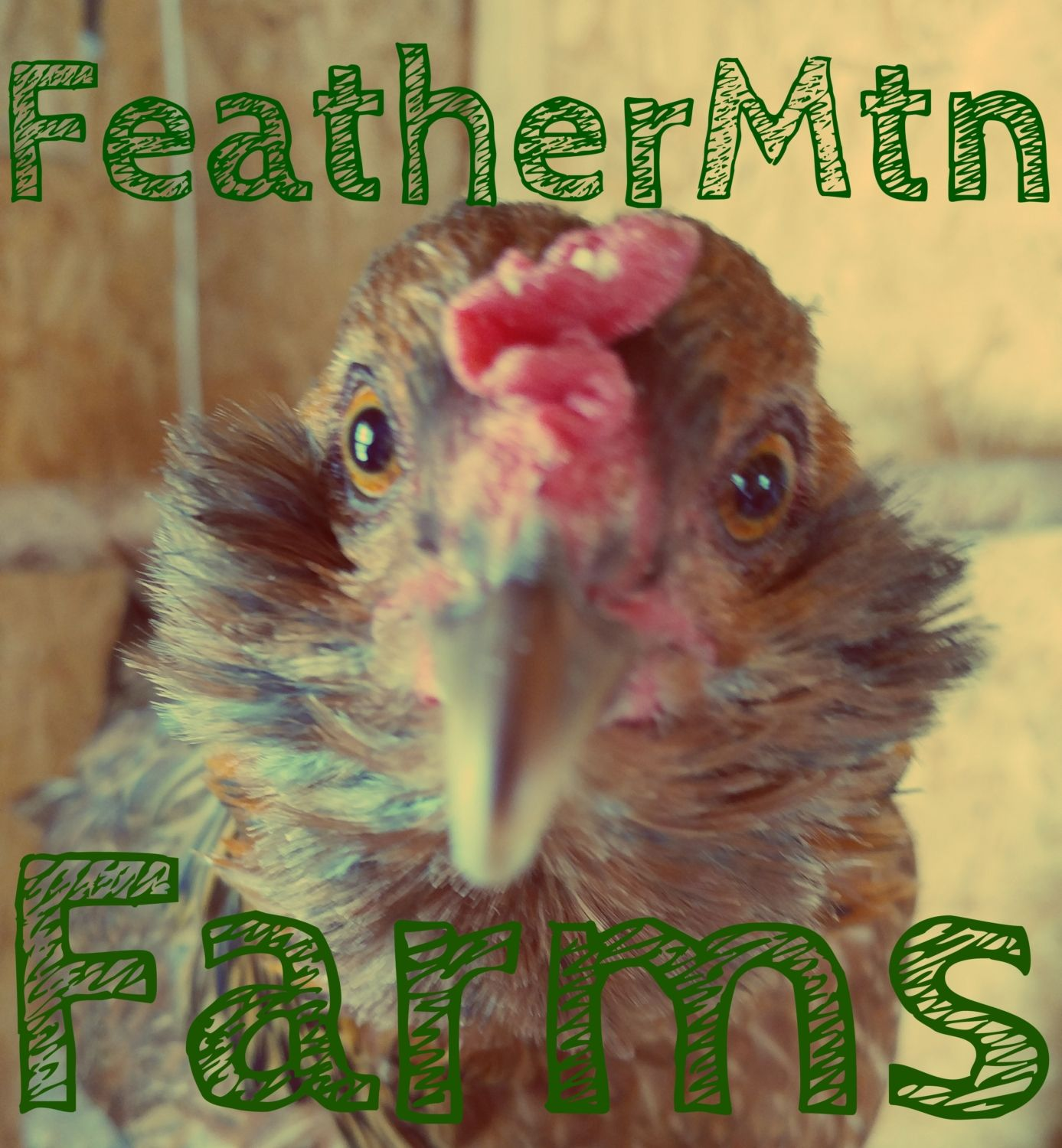FeatherMtnFarms