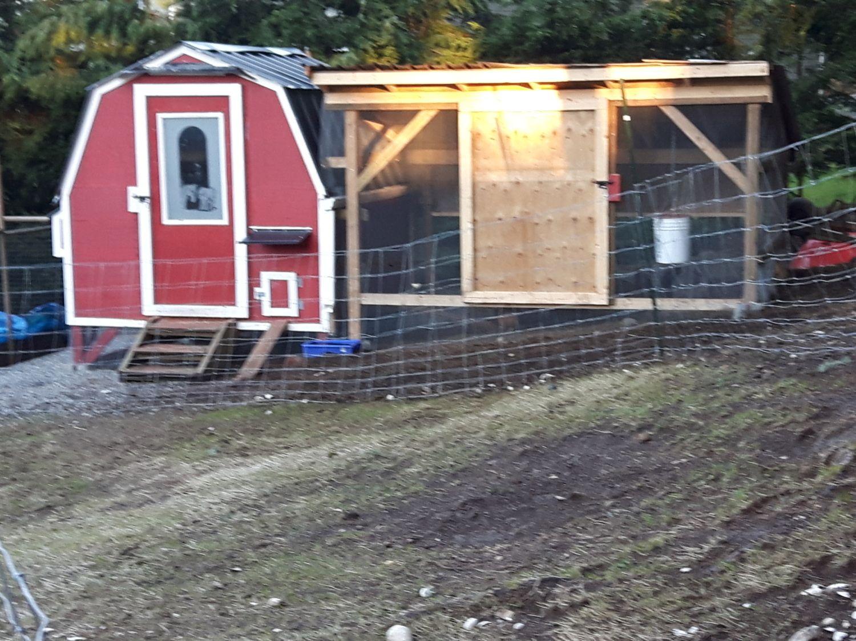lyrad64's photos in Built my coop