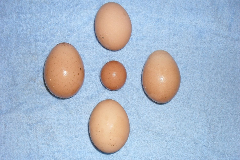 A fart egg