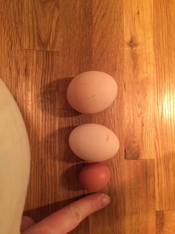 Stephine's photos in Tiny egg!?