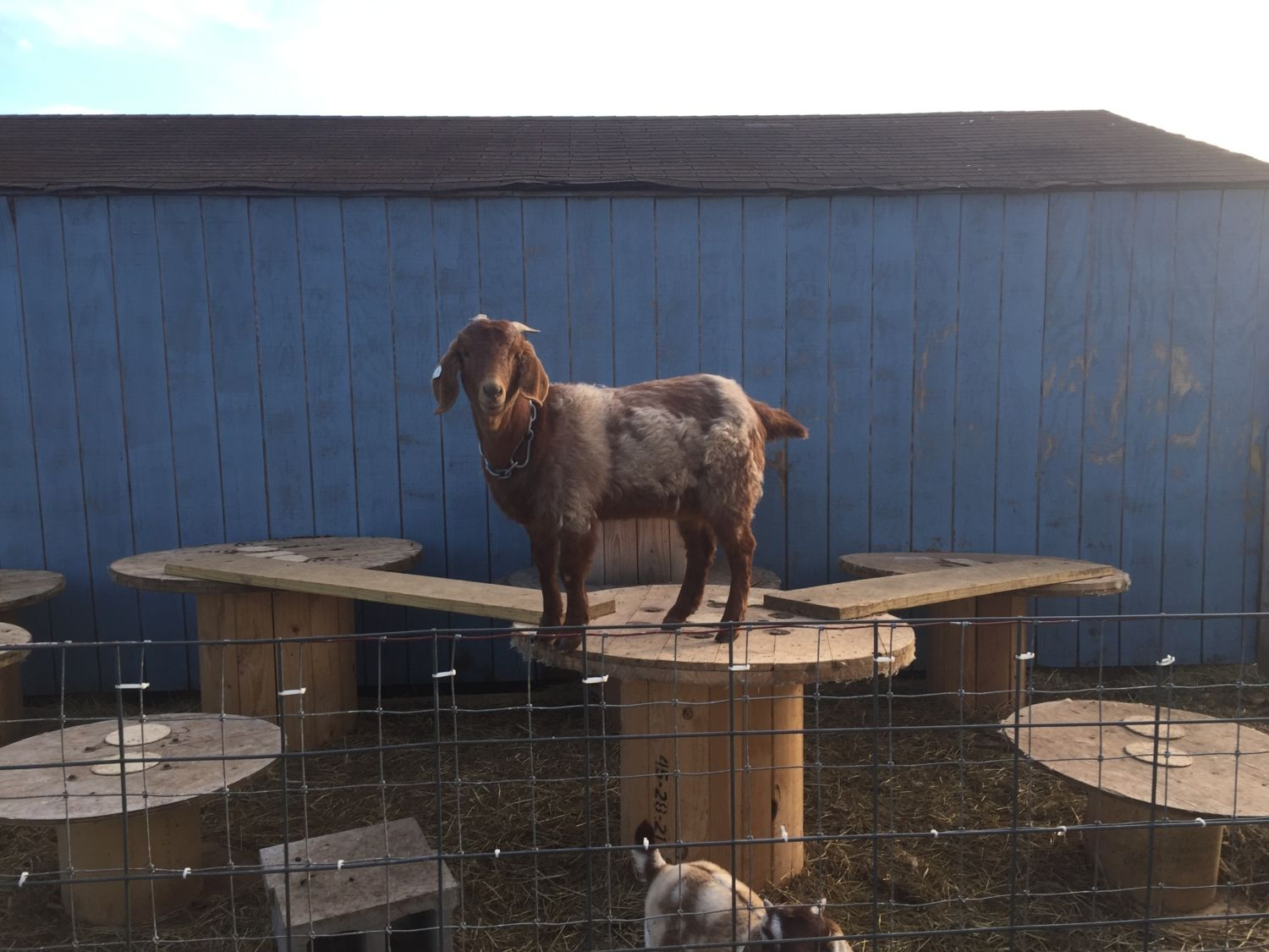 Goat playgrounds