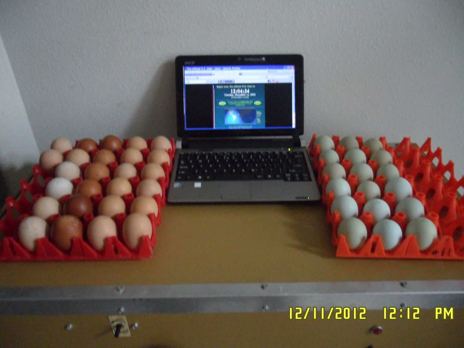 NYD Hatchalong Eggs