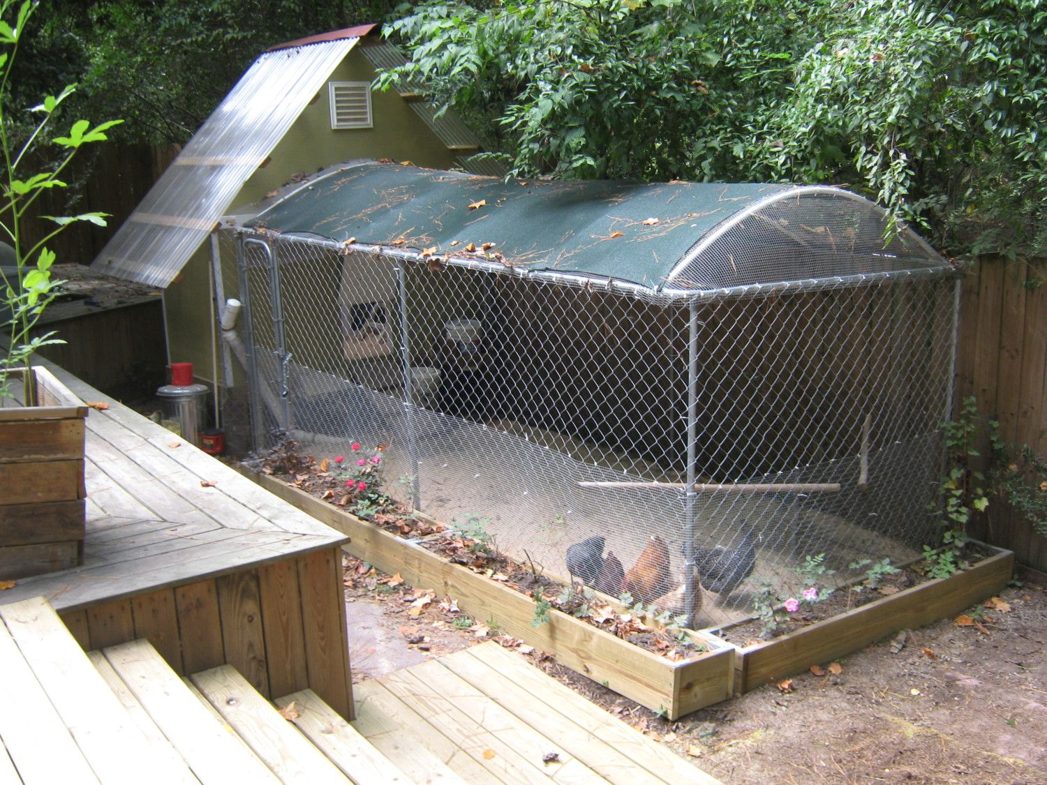 georgiagail's photos in 10x10 dog kennel as open coop tips