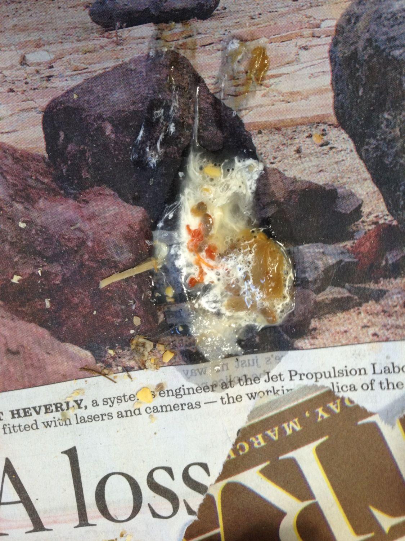 Rust Colored Poop